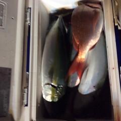 11月13日(月)  午後便・ウタセ真鯛の写真その8