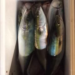 11月13日(月)  午後便・ウタセ真鯛の写真その9