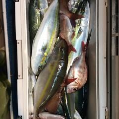 11月17日(金)  午後便・ウタセ真鯛の写真その5