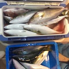 11月17日(金)  午後便・ウタセ真鯛の写真その6