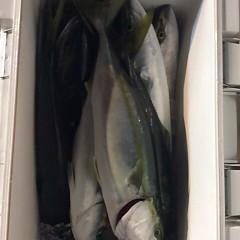 11月17日(金)  午後便・ウタセ真鯛の写真その9
