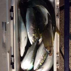 11月17日(金)  午後便・ウタセ真鯛の写真その11