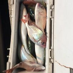 11月20日(月)午後便・ウタセマダイ釣りの写真その8