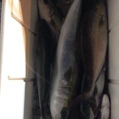 11月21日(火)  午後便・ウタセ真鯛の写真その8