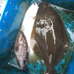 11月22日(水)  午前便・ヒラメ釣りの写真その4