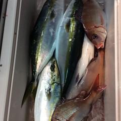 11月25日(土)  午後便・ウタセ真鯛の写真その5