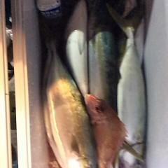 11月25日(土)  午後便・ウタセ真鯛の写真その7