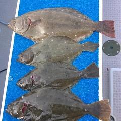 11月26日(日)  午前便・ヒラメ釣り 午後便ウタセ真鯛の写真その6