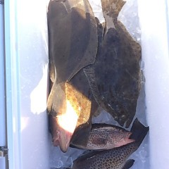 11月27日 (月) 午前便・ヒラメ釣りの写真その6