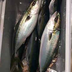 11月27日 (月) 午後便・ウタセ真鯛の写真その2
