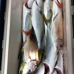 11月28日 (火) 午後便・ウタセ真鯛の写真その6
