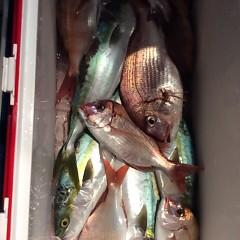11月28日 (火) 午後便・ウタセ真鯛の写真その7