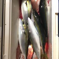 11月28日 (火) 午後便・ウタセ真鯛の写真その8