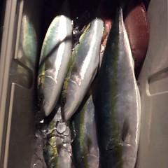 11月28日 (火) 午後便・ウタセ真鯛の写真その9