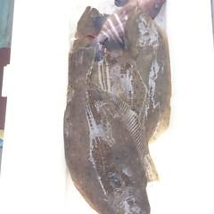 11月29日 (水) 午前便・ヒラメ釣り 午後便・ウタセ真鯛の写真その3