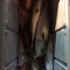 11月29日 (水) 午前便・ヒラメ釣り 午後便・ウタセ真鯛の写真その7