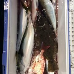 12月1日 (金)  午後便・ウタセ真鯛の写真その9