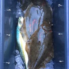 12月3日 (日)  午前便・ヒラメ釣り 午後便・ウタセ真鯛の写真その6