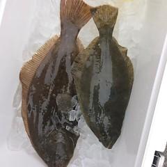 12月5日(月)午前便・ヒラメ釣り・午後便・ウタセ釣りの写真その2