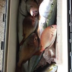 12月6日 (水)  午前便・ヒラメ釣り・午後便・ウタセ真鯛の写真その2