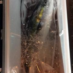 12月6日 (水)  午前便・ヒラメ釣り・午後便・ウタセ真鯛の写真その3
