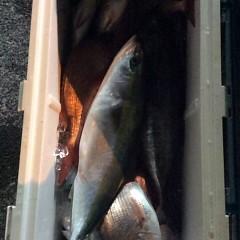 12月6日 (水)  午前便・ヒラメ釣り・午後便・ウタセ真鯛の写真その4