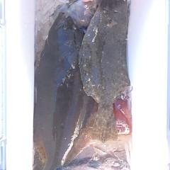 12月7日 (木)  午前便・ヒラメ釣りの写真その6