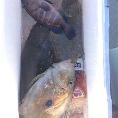 12月7日 (木)  午前便・ヒラメ釣りの写真その7