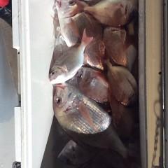 12月7日 (木)  午前便・ヒラメ釣りの写真その10