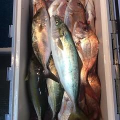 12月8日 (金)  午後便・ウタセ真鯛の写真その2