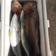 12月8日 (金)  午後便・ウタセ真鯛の写真その3
