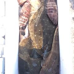 12月11日 (月) 午前便・ヒラメ釣りの写真その4