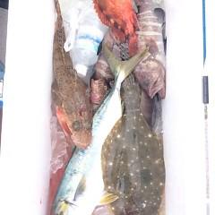 12月16日 (土) 午前便・ヒラメ釣り・午後便・ウタセ真鯛の写真その5