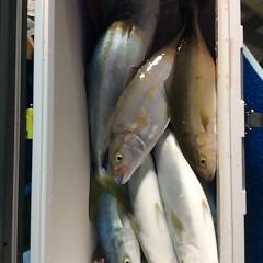 12月16日 (土) 午前便・ヒラメ釣り・午後便・ウタセ真鯛の写真その9