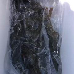 12月 29日 (金) 午前便・ヒラメ釣りの写真その6