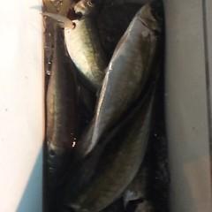 1月 19日 (金) 午後便・アジ釣りの写真その8