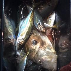 1月 19日 (金) 午後便・アジ釣りの写真その9