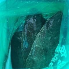 1月 20日 (土)  午前便・ヒラメ釣りの写真その5
