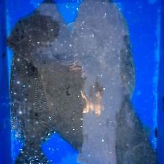 2月4日 (日) 1日便・ヒラメ釣りの写真その6