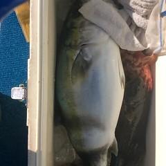 2月4日 (日) 1日便・ヒラメ釣りの写真その8