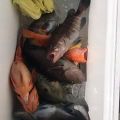 2月13日( 火)午前便・イワシの泳がせ釣りの写真その4