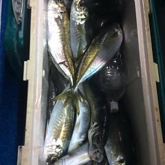 2月14日 (水) 午後便・アジ釣りの写真その4