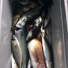 2月25日 (日) 午後便・アジ釣りの写真その3
