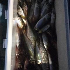 3月15日(木)  午後便・アジ釣りの写真その9
