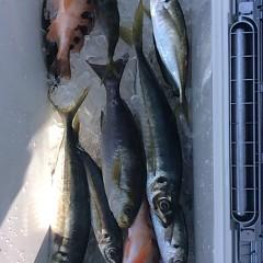 3月28日(水)午前・午後便・アジ釣りの写真その8