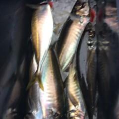 4月14日(土)  アジ釣りの写真その5