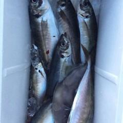 4月18日(水)  午後便・アジ釣りの写真その3