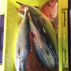 4月21日(土)  午後便・ウタセ真鯛の写真その7