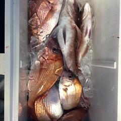 4月22日(日)  午前便・アジ釣り・午後便・ウタセ真鯛の写真その3