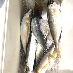 4月23日(月)  午前便・アジ釣り・午後便・ウタセ真鯛の写真その8